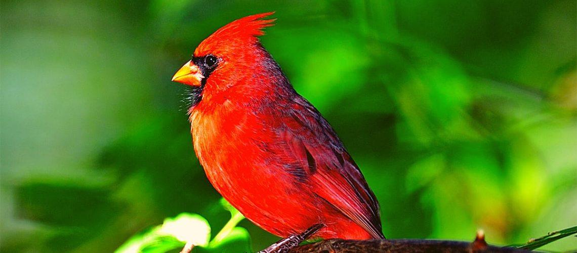 cardinal-poc-1